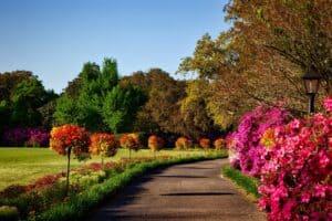 a garden that has been pruned
